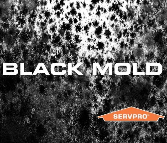 Mold? SERVPRO of Indianapolis North To The Rescue